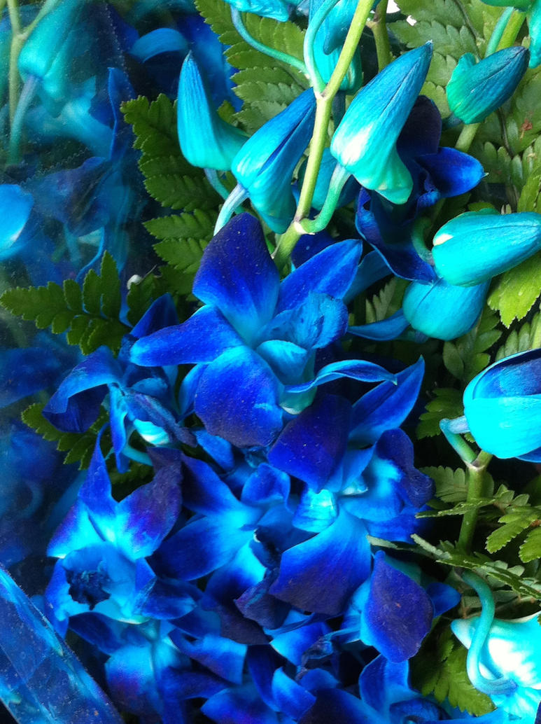 Flowers that are blue like my mood by rayshiro yue on deviantart flowers that are blue like my mood by rayshiro yue izmirmasajfo