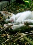 Feline Innocence II by annbemoish