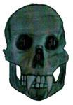 SkullFang191 by darkwolf244
