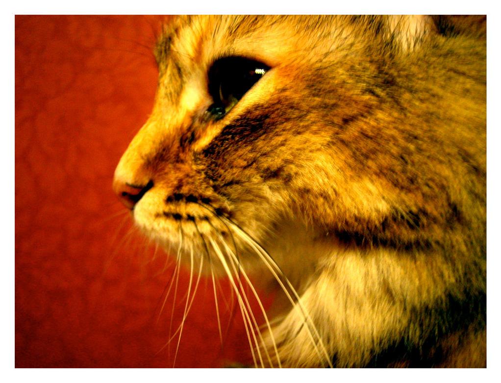 Profile Fox by mini-LYN