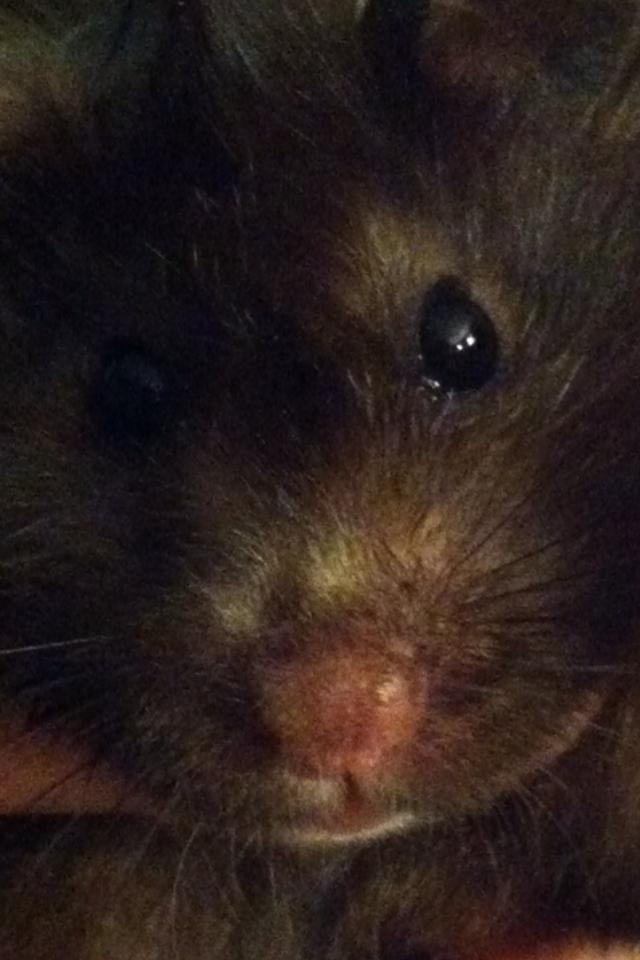 Bear the Hamster 2 by percyjackson8299