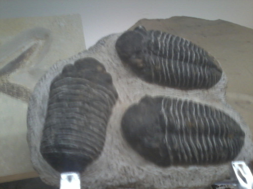 Just Some Epic Trilobite by LMW-The-Poet