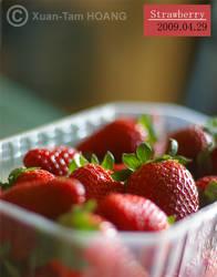 Yummy Strawberries by xuantamkun