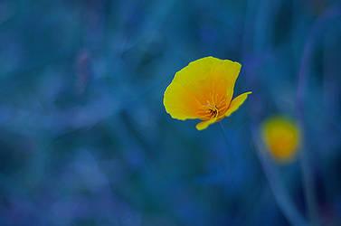 Blue Yellow by xuantamkun