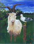 Billigoat and Seagull - acrylic painting