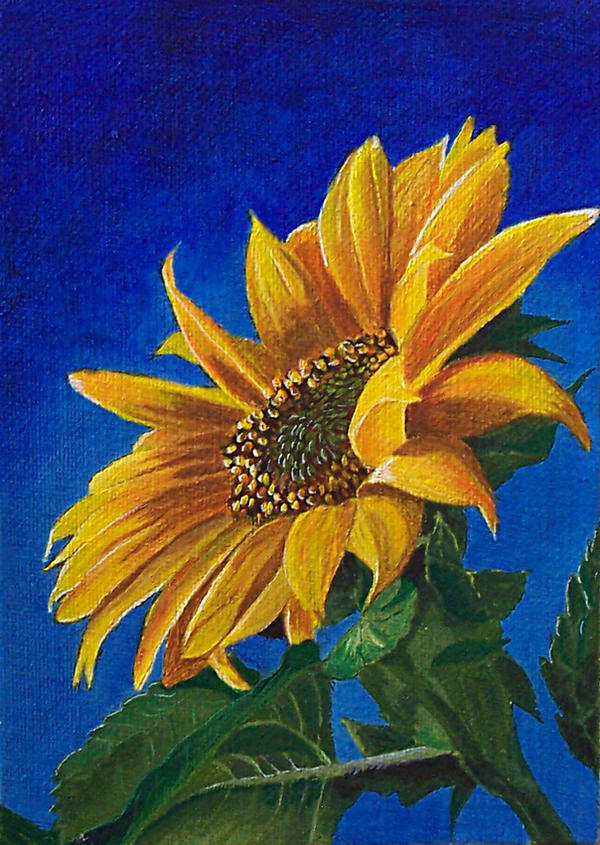 sunflower acrylics painting by giselle m on deviantart