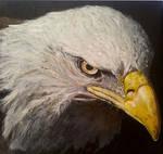 Eagle - acrylic painting