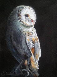 Wise Old Bird - acrylic aceo