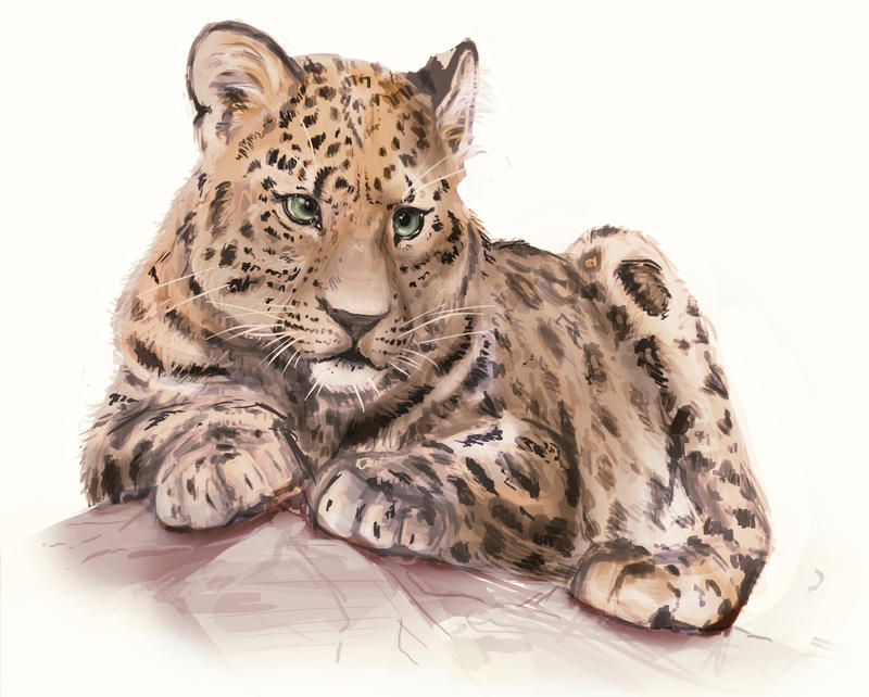 Leopard Study by Eliket