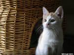 Cute Kitten - or two
