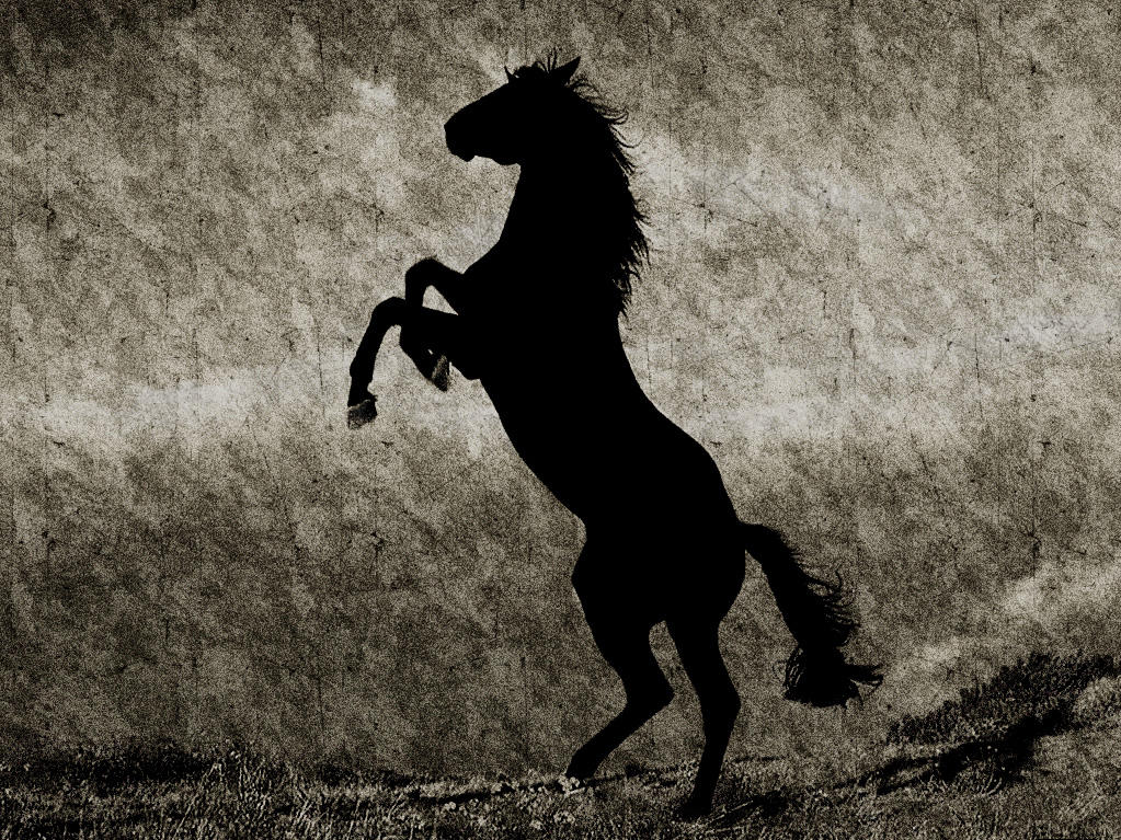 Dark Horse by Dvarvenking on DeviantArt Dark Horse