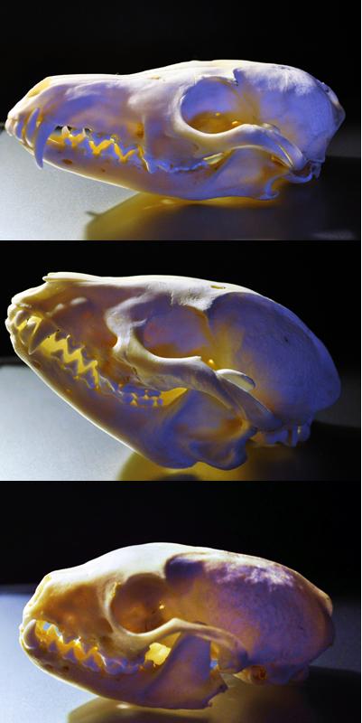 Skulls. by Safiru