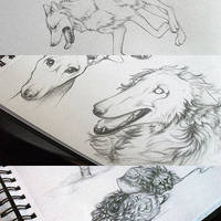 Sketches. by Safiru