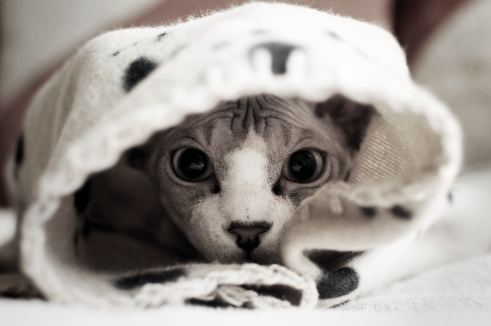 Kittykitty. by Safiru
