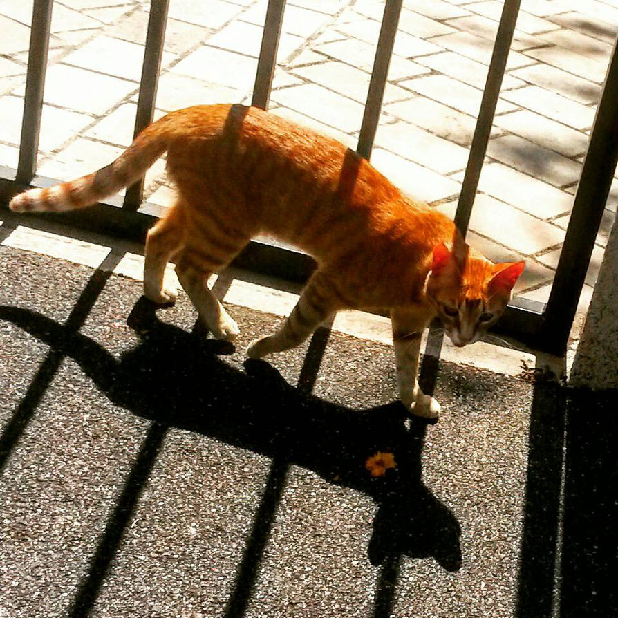 chat poetique  by lilivia91