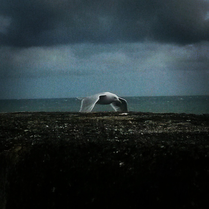 Le Goeland by lilivia91
