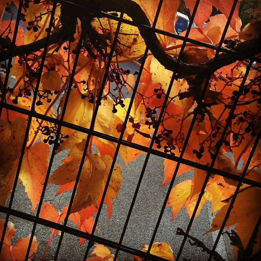les feuilles d automne by lilivia91