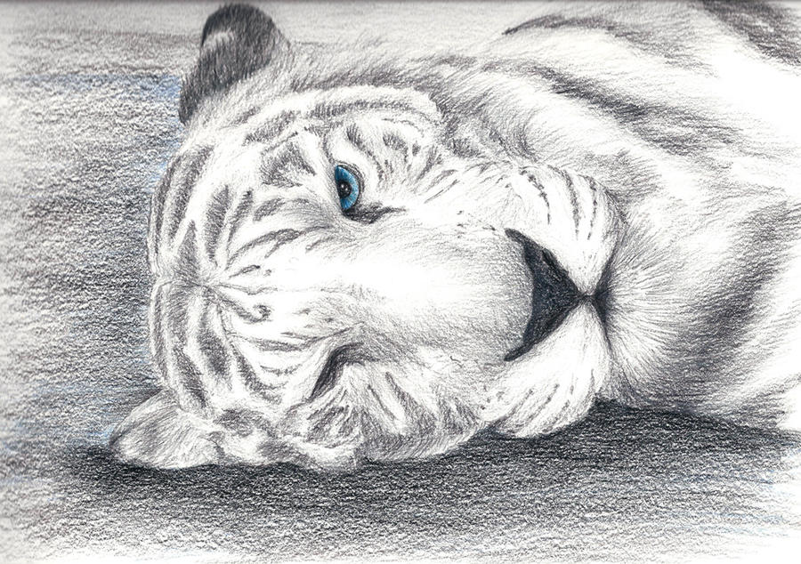 Bengal Tiger by Vinzul