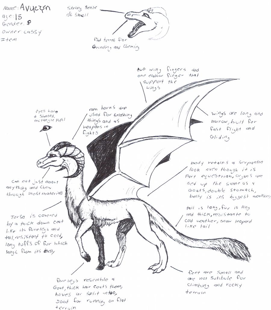 avycyn ref sheet by dragon-master-13