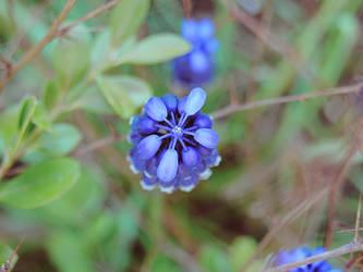 blue by Brdamante5056