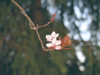 fleur by Brdamante5056
