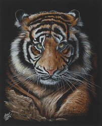 Tiger by AndyGill1964