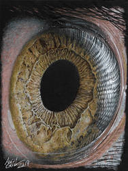 Eye 2 by AndyGill1964