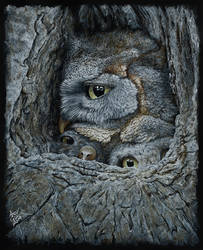 Owls by AndyGill1964