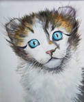 My drawing, American curl