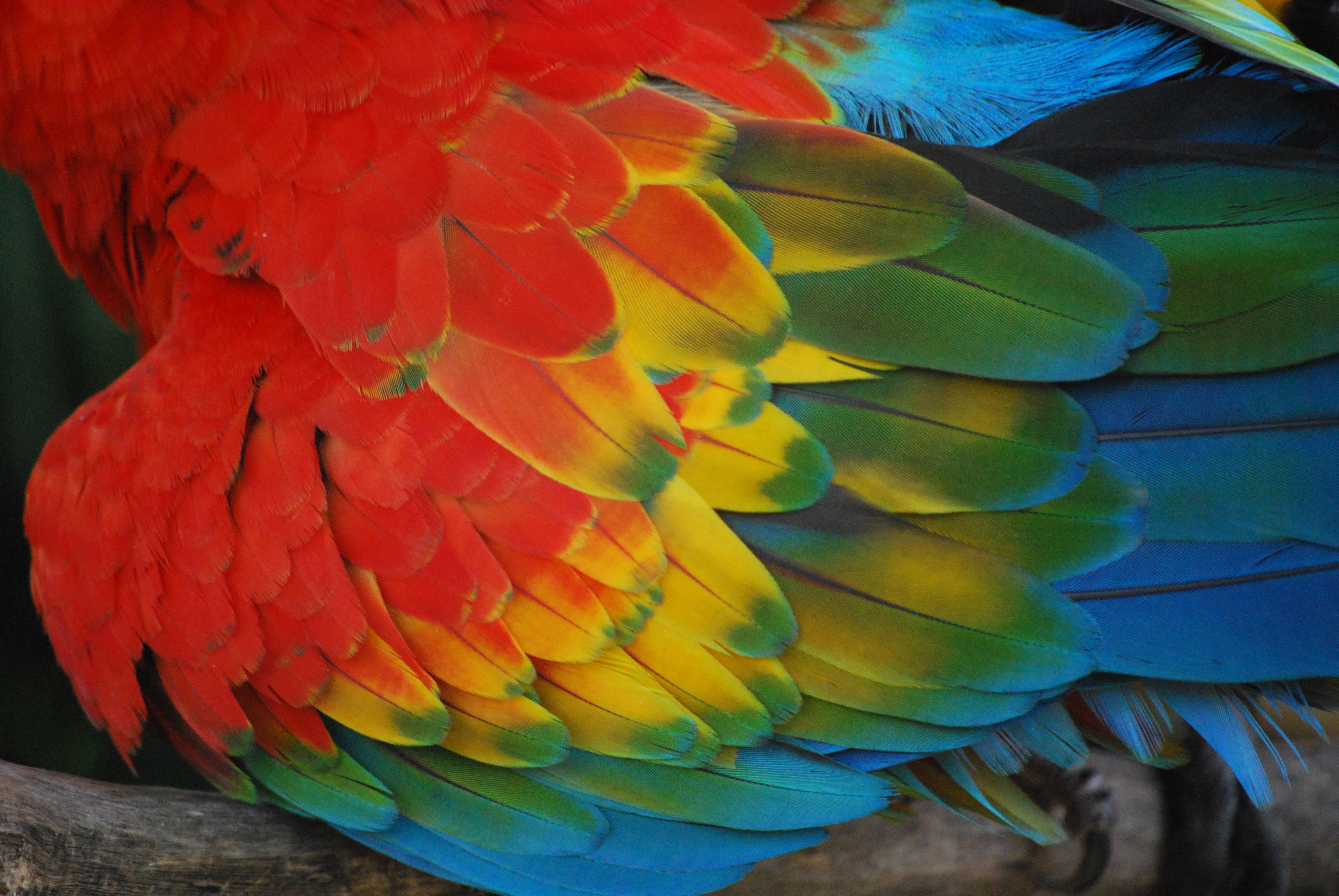 Parrot feathers - photo#1