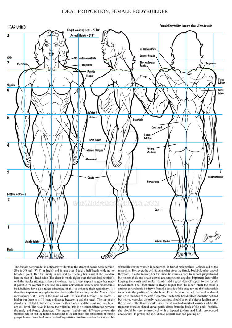 Drawings of women bodybuilders congratulate, the