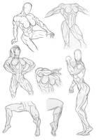Anatomy Practice Legs and Torsos