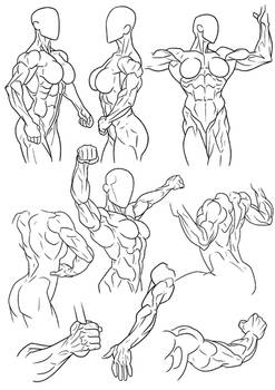 Figure Reference Female Muscle