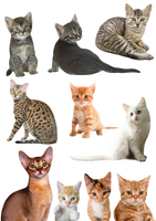 Cats and Kittens PNG by Anavrin2010