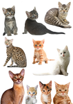 Cats and Kittens PNG