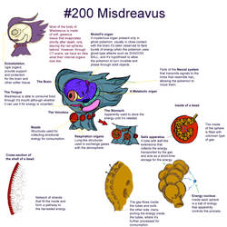 Misdreavus, an anatomy study