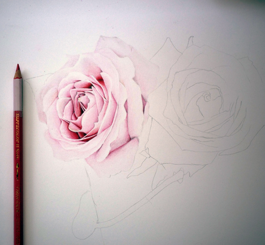 Roses WIP by manany