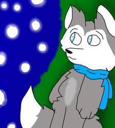 Huskito looks at the stars