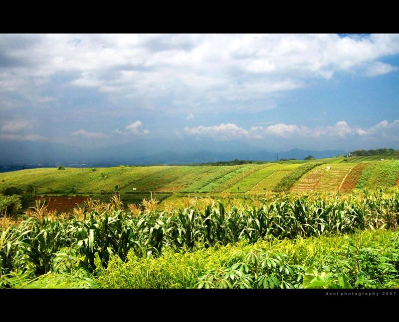 At The Corn Field 4 by zaka-hayank
