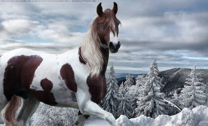 Winter Horse Pic