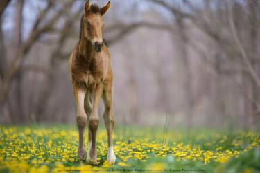 Foal in a Field