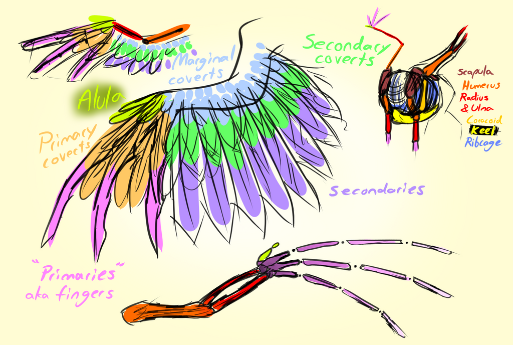 mlp pegasus wing study by wolframclaws on deviantart
