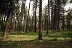 ((STOCK)) :: Forest Two