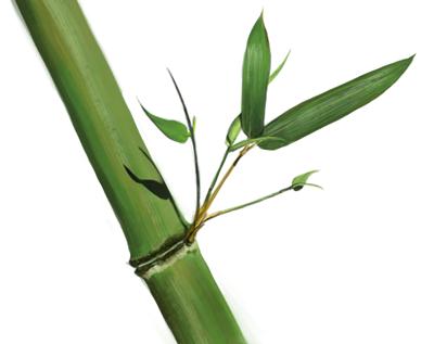Bamboo - study by KM-Chai