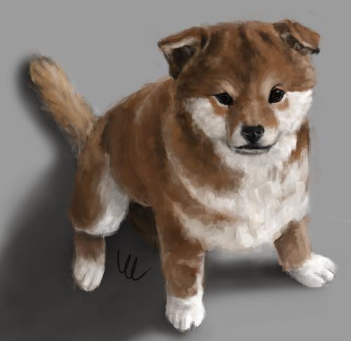 Shiba Inu puppy by KM-Chai