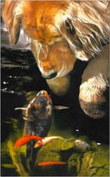 Golden Retriever and Koi Fish