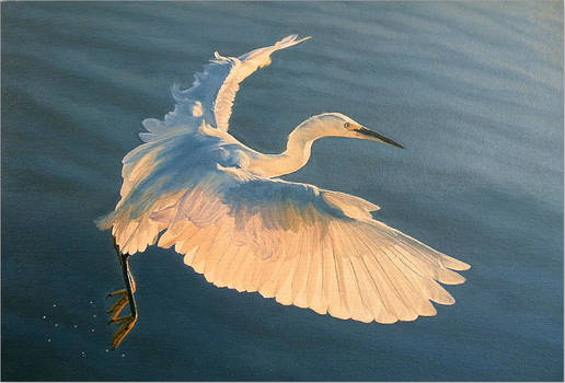 Snowy Egret Over Waves