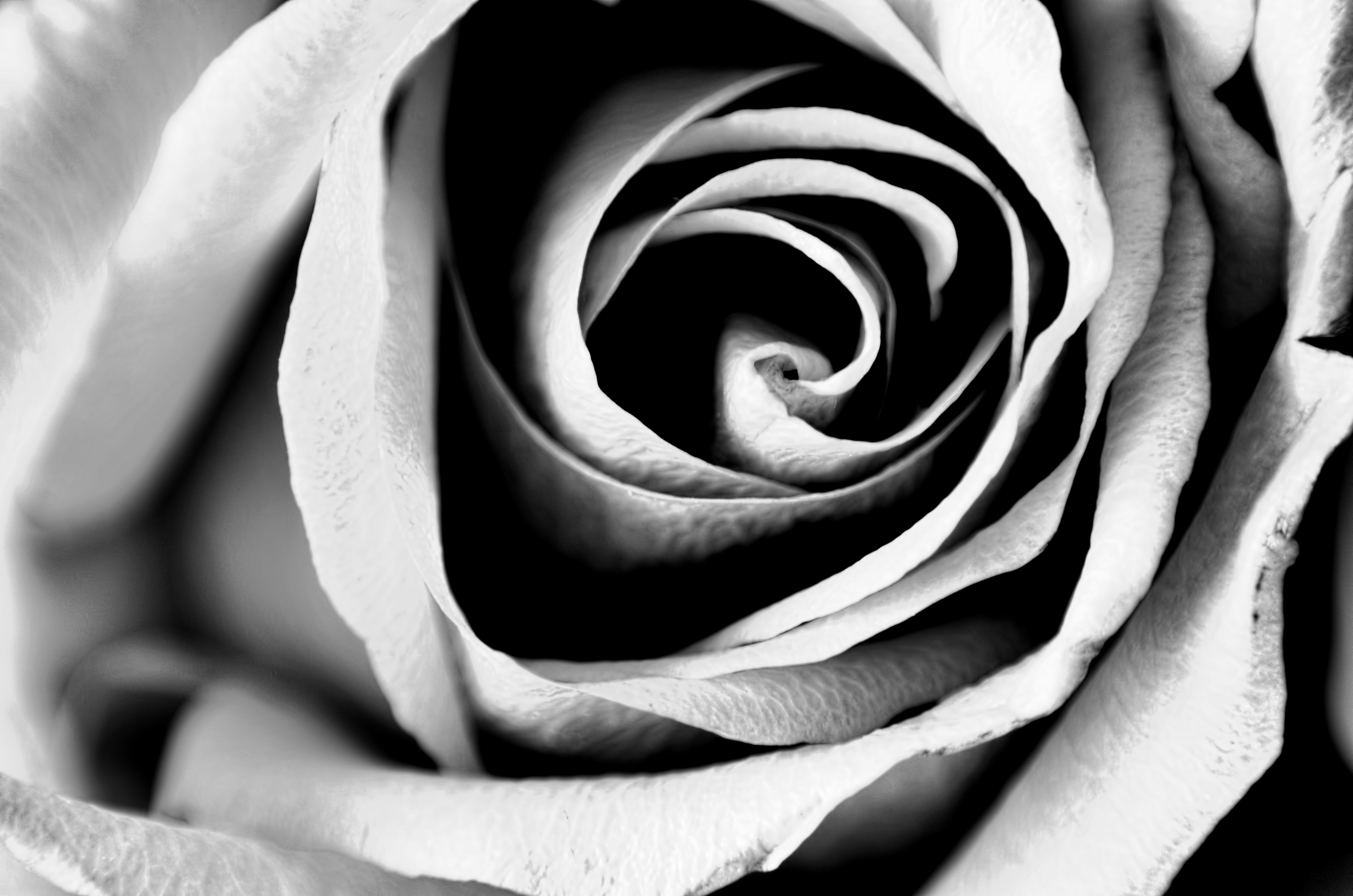 Flower Macro Black And White by drivenbyblood on DeviantArt