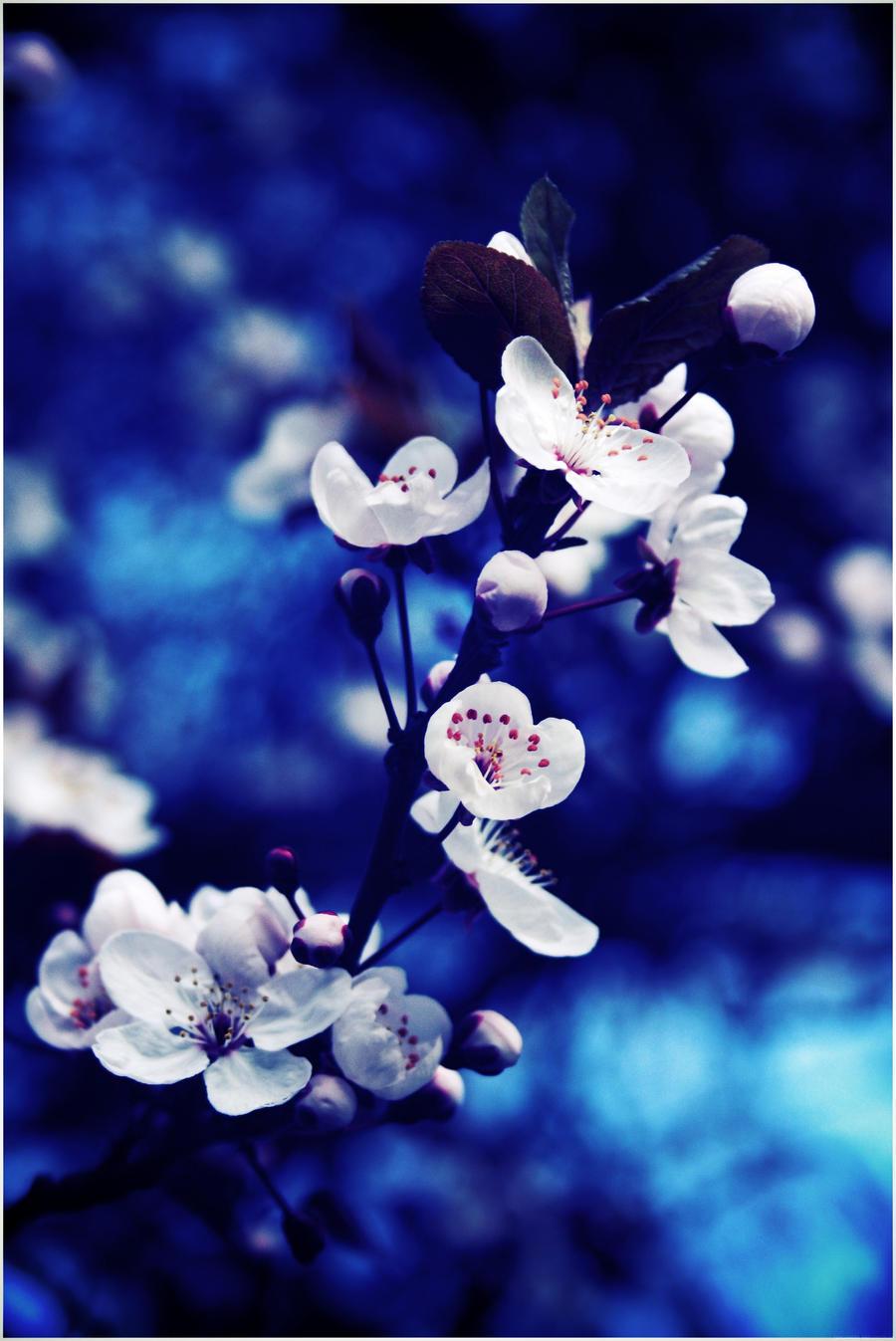 Blue Flower by CreamyJem