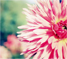 Sunny Pink by missninaka